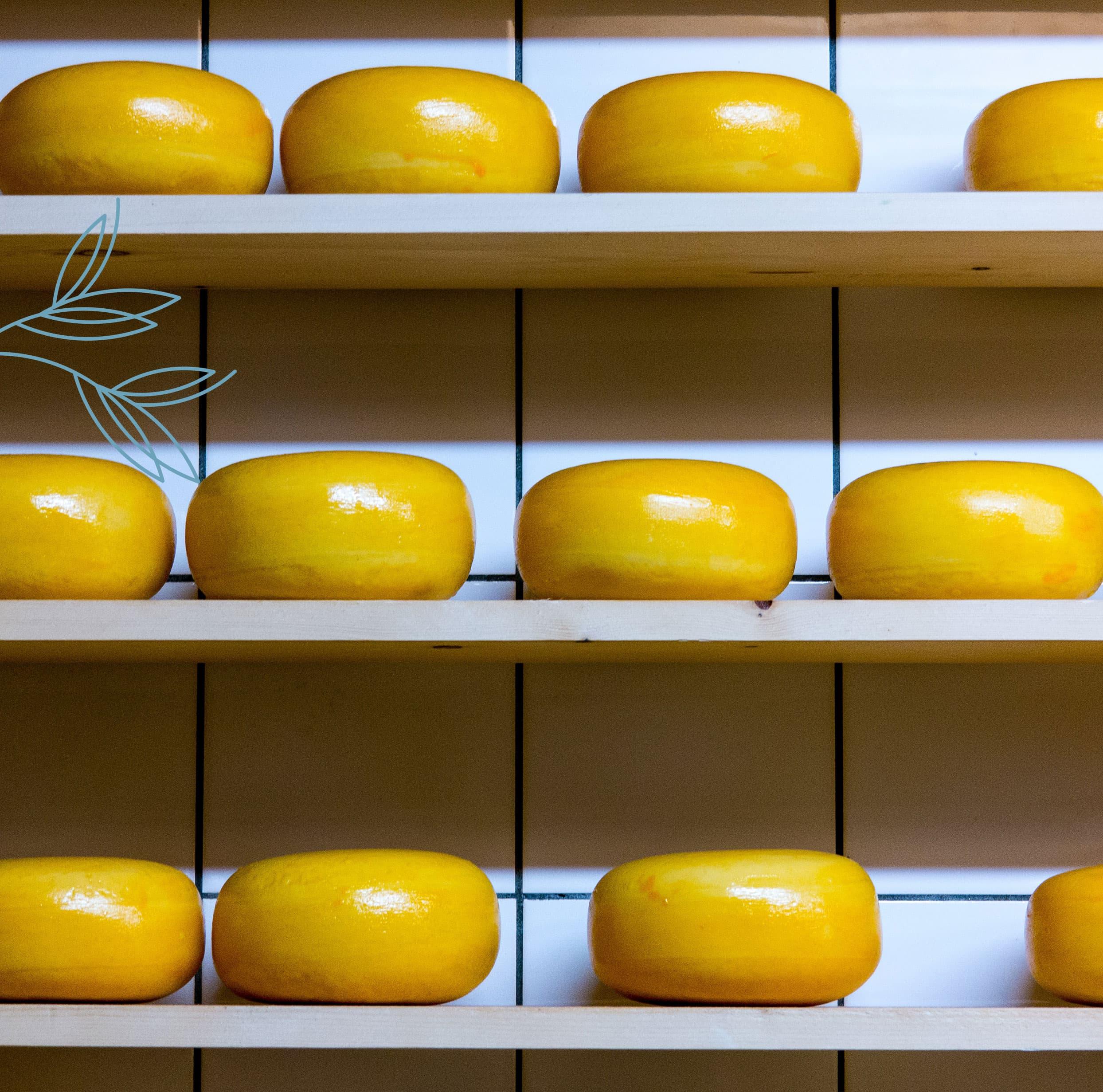 cheese_detail_half
